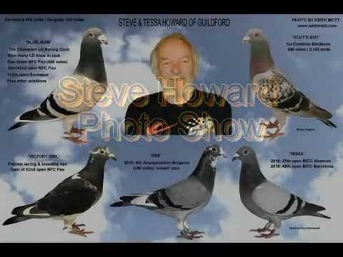 Video 251: Steve Howard of Guildford: Premier Pigeon Racer