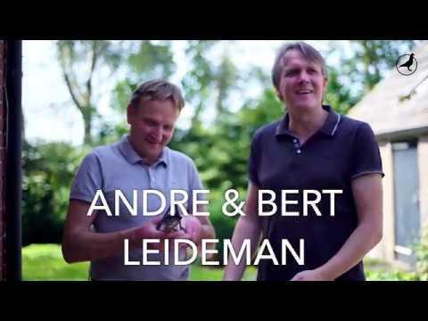PIPA TV: Gebroeders Leideman (NL) talk about their top pigeon 'Goed Grijs'