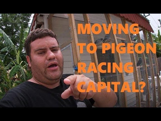 Jose's  Pigeon Racing Sport Rant - GHC CLUB - FEED - COST OF MEDS