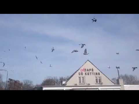 Kring 2, Boxtel, 7/4/18, 6700 duiven.