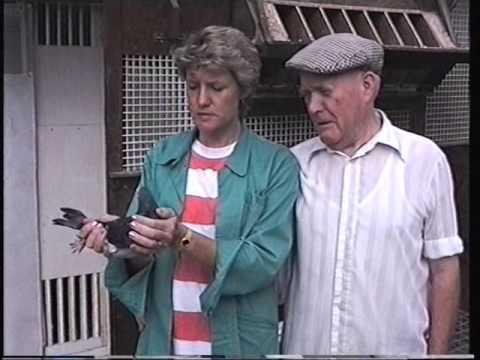 Video 97: Terry & Karen Haley of Watford: Premier Pigeon Racers