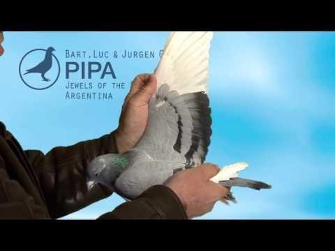 PIPA - Geerinckx Auction - Argentina Jewels
