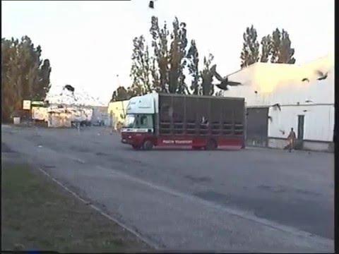 Video 84: L&SECC Bordeaux Pigeon Race 2000