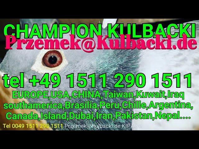 następne wysyłki rasy Kulbacki next shipping tel +49 1511 290 1511 KULBACKI.de Przemek@Kulbacki.de