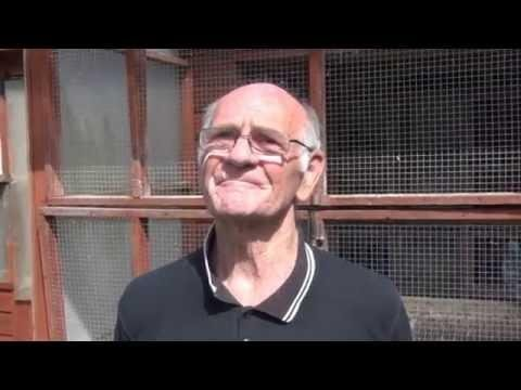 Video 321: Tom Williams of Orpington: Premier Pigeon Racer