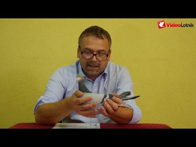 Gołębie Meier - prezentacja gołębi na aukcje - Gregor Wichary Europapigeons Juwels