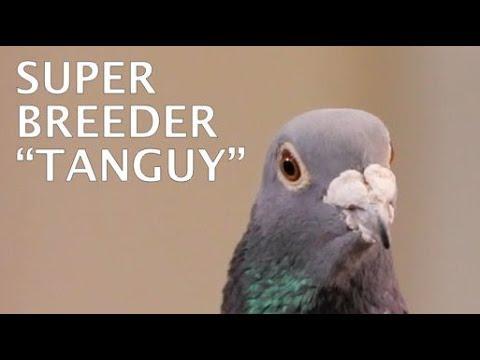 """SUPER BREEDER """"Tanguy"""" Presented #HansAndEvertJanEijerkamp"""