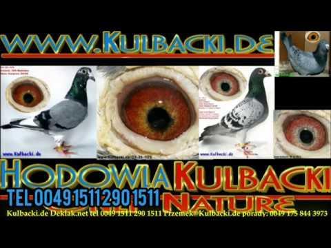 Auctions.Kipa.be nowe aukcje wkrótce zapraszamy do rejestracji na aukcji gołębi welcome