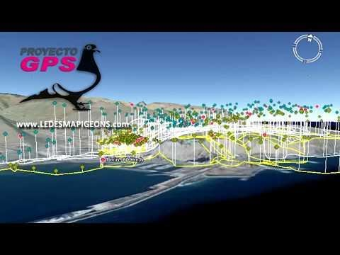 Pigeons flying from Gomera Island to Tenerife Island tracked with GPS