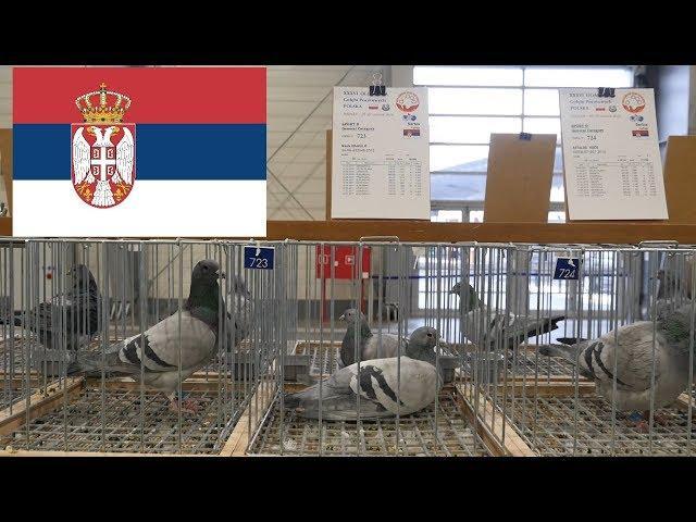 Serbia - Olimpiada Gołębi, Pigeon Olympiad - Poznań 2019