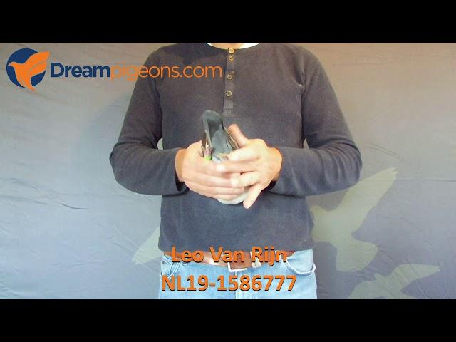 NL19-1586777 - Leo Van Rijn Dreampigeons Auction Video