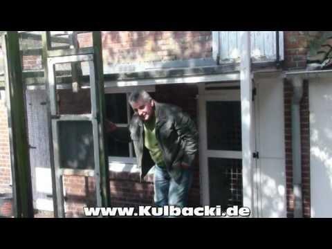 Teil 5-5, Originale Gebrüder Janssen Tauben bei Kulbacki und Sohn in Germany!