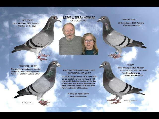 Video 379: Steve & Tessa Howard of Guildford: Premier Pigeon Racers