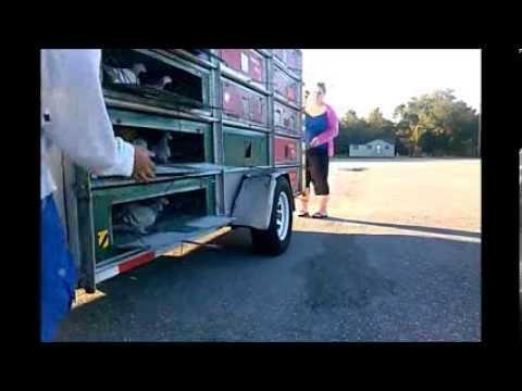 Southwest Florida Pigeon Racing Combine 11/23/2013 Hawthorne, Florida