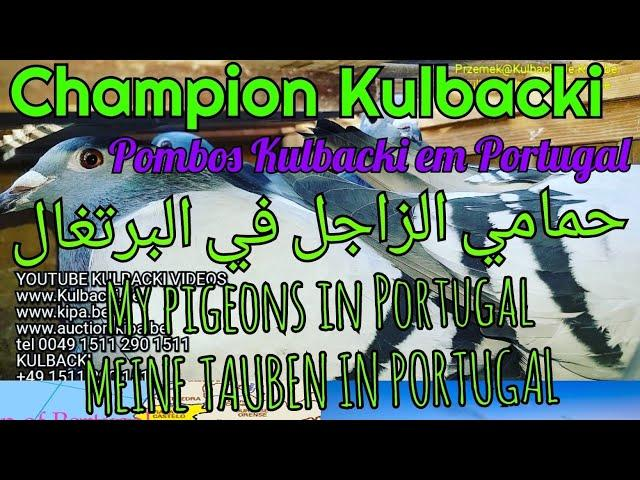 Pombos Kulbacki em Portugal MEINE TAUBEN IN PORTUGAL My pigeons in Portugalحمامي الزاجل في البرتغال