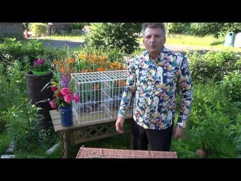 Młode gołębie na sprzedaż tel. 728 465 939