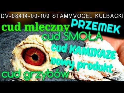 mleko + smoła + grzyby = CUD NATURY, wszystko wygrane na wystawie na Śląsku, oto film!
