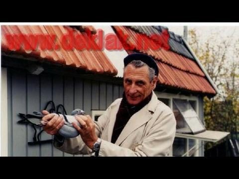 Kulbacki racing pigeons 100% Deklak Janssen pigeons contact tel 0049 1511 290 1511