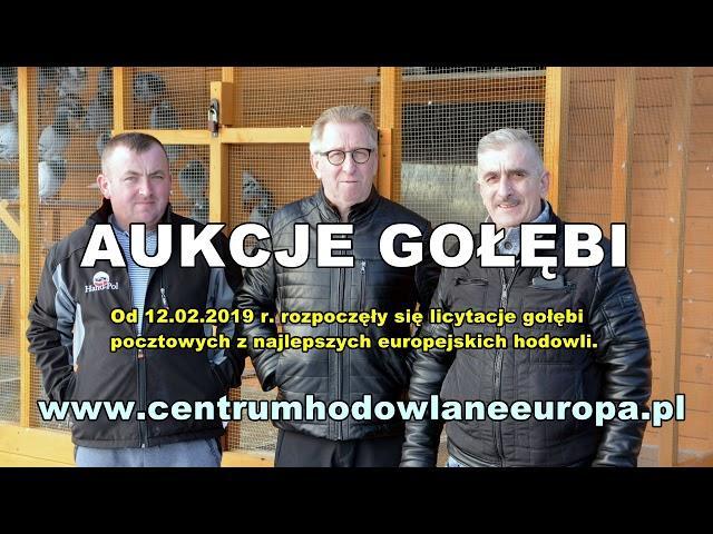 AUKCJE GOŁĘBI - Centrum Hodowlane Europa