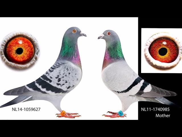 NL17-1277643