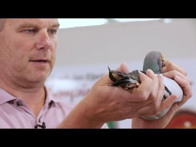 Presentation of super breeder Rossi (Heremans-Ceusters)