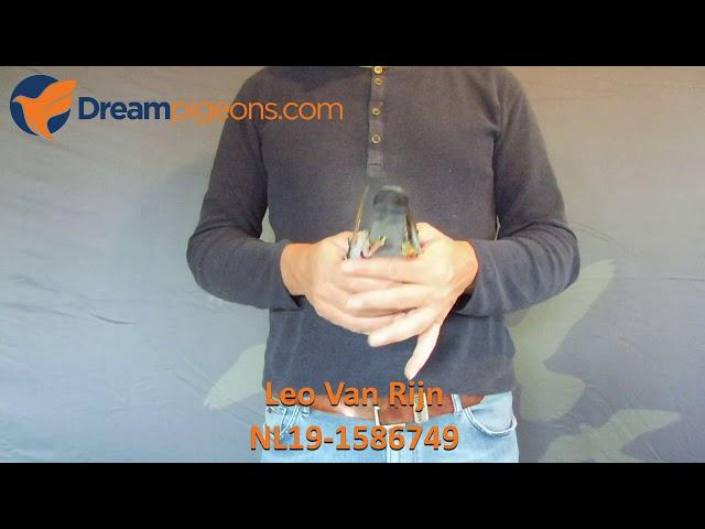 NL19-1586749 - Leo Van Rijn Dreampigeons Auction Video