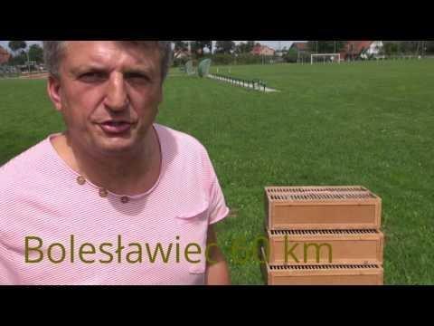 Treningi gołębi młodych sunloft.pl