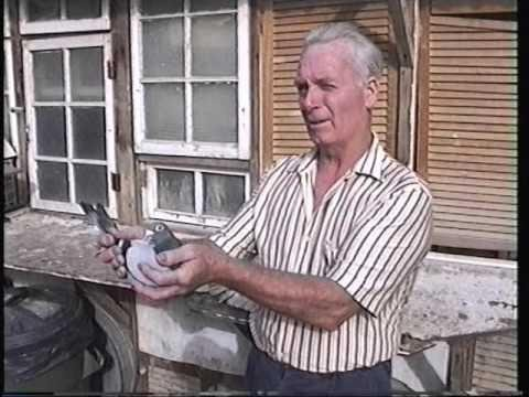 Video 99: Brian Goodwin / Gerry Byrne: Premier Pigeon Racers
