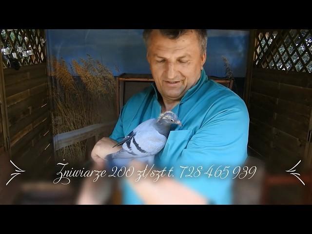 Tajemnica gołębi Żniwiarzy ujawniona tel. 728 465 939