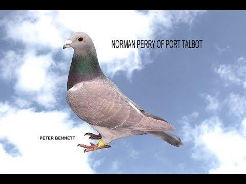 Video 363: Norman Perry of Port Talbot: Show Pigeons