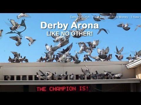 Derby ARONA 2016 - Gran Canaria Race-2