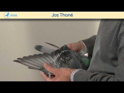 PIPA - Jos Thoné Auction - Goor