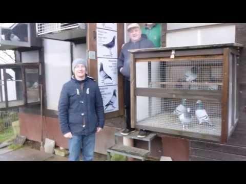SG Trautmann-Michalik  gołebnik lotowy