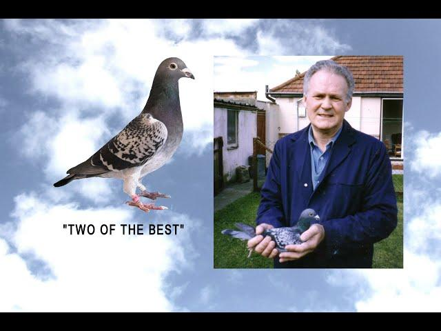 "Video 441: ""Two Of The Best"": Steve Tote / Ray Patton: Premier Pigeon Racers"