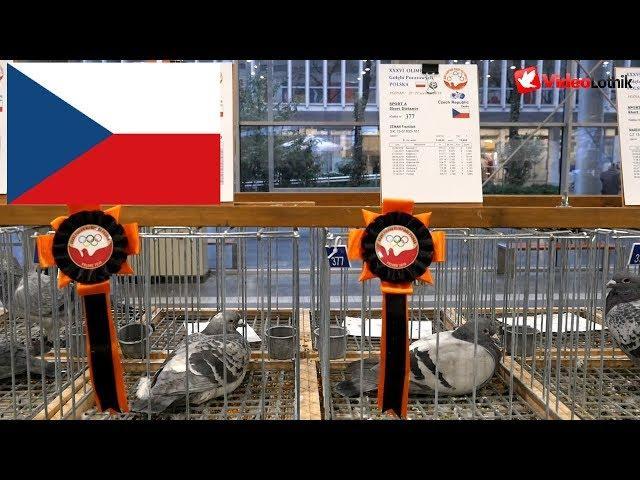 Czech Republic, Czechy, Česká republika - Olimpiada Gołębi, Pigeon Olimpics, Holubská olympiáda