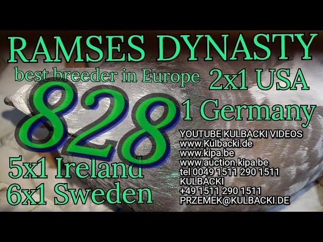 828,ojciec:Champion 41 x Stampara x matka: córka Ramsesa 14x1. (6x Sweden 5x Irland 2xUSA 1xGermany)