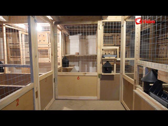 Modernizacja gołębnika, wzmocnienia hodowli i cel charytatywny - A&M Buszko - PZHGP 0324 Kwidzyn