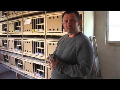 Mariusz Dmitruk - nowe gołębniki, gołębie, itp. - część 02 - 15.04.2016r