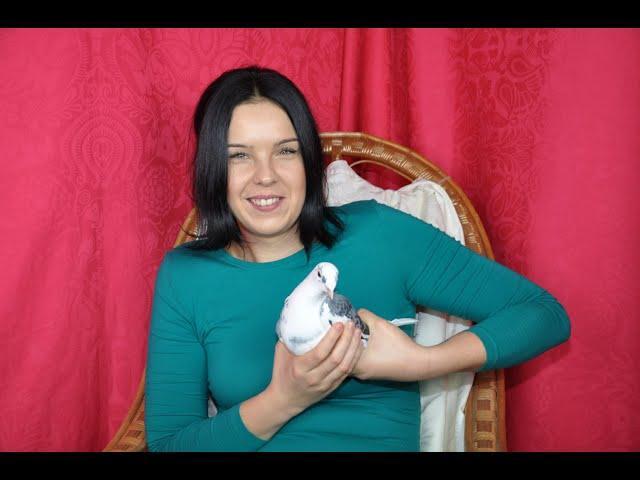 Gołębie Aarden -  córka Pstrego Karola i syn Kubusia młode w cenie 5 tys./parka tel. 728 465 939