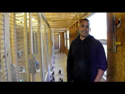 Oscar Betancourt - GHC champion pigeon racer -  loft interview