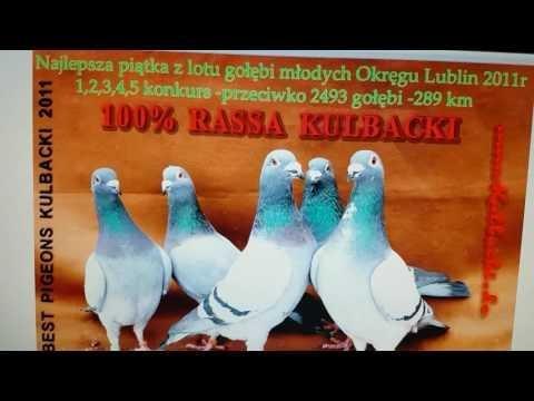 Najlepsza 5 tka z lotu Okręgu Lublin przeciwko 2493 gołębie 1,2,3,4,5 Rasa Kulbacki best 5 Champions