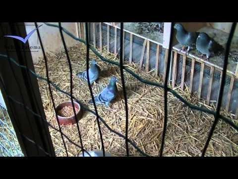 Op De Beeck - Baetens [Racing Pigeons Loft / Taubenschlag / Palomar] (2014)