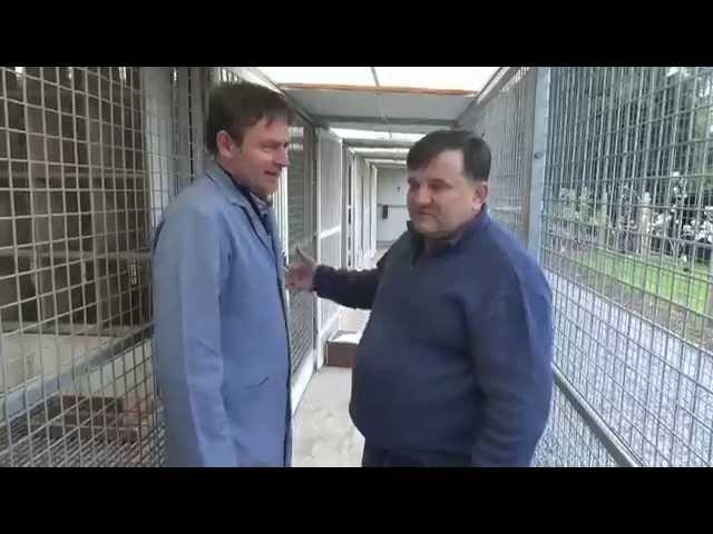 Jos Thone - prezentacja gołębi - Artur Pawelec