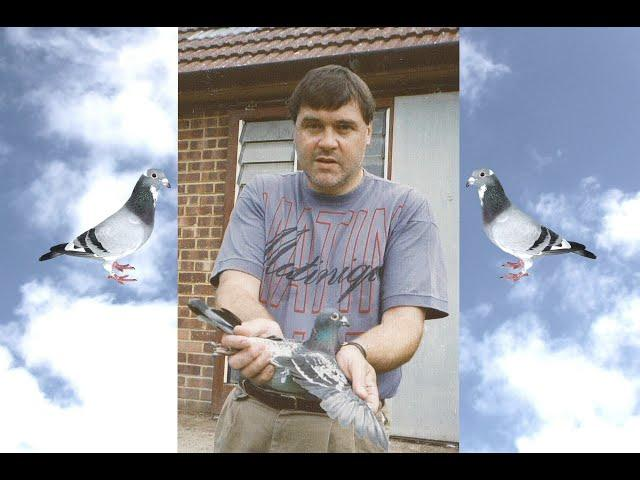 Video 451: Alasdair Muir of Abinger Hammer: Premier Pigeon Racer
