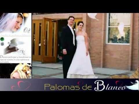 Palomas de Blanco Celebraciones - Ledesma International Group