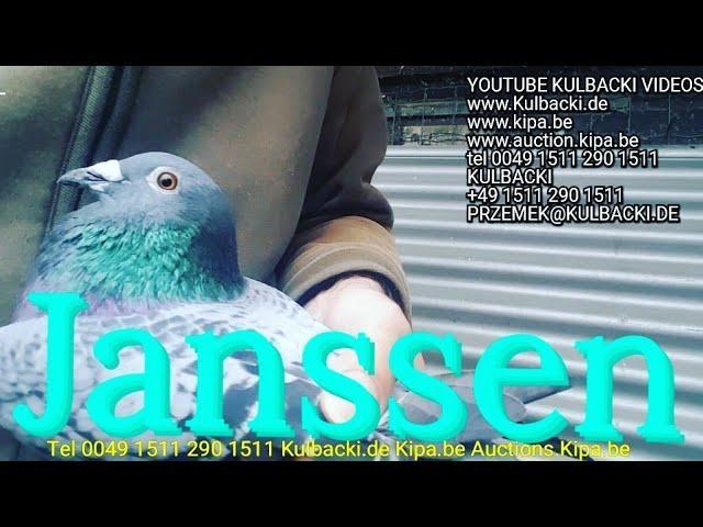 1103 Janssen na sprzedaz, Jansen cock for sale, Männchen Janssen zum verkauf tel+49 1511 290 1511