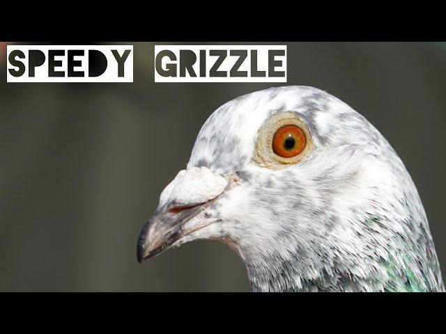 Vlog #80 SPEEDY GRIZZLE The Leader