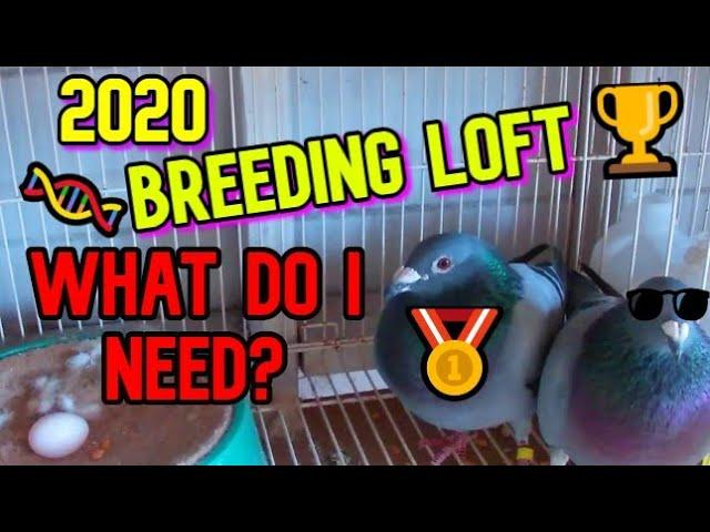 What Does my PIGEON RACING Breeding Loft Need To look Like in 2020?