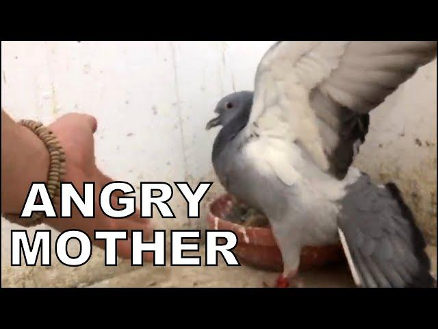 ANGRY MOTHER FIGHTS FOR HER Youngsters