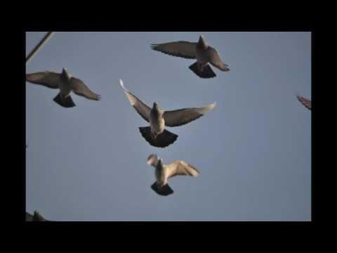 Gołębie w niebie , muzyka relaksacyjna ...9.